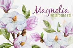 Magnolia set (watercolor, vector) by Lembrik's Artworks on Creative Market