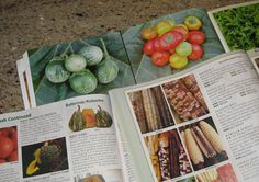 Starting Seeds to Perfection, Seed Catalogs and more.