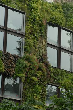 ♂ Vertical garden green living wall Sustainable architecture design Quai Branly