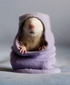 Rodents do not usually make me smile....but this one, well, it's just precious!
