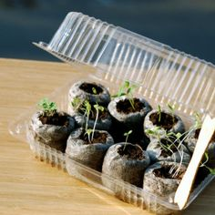 Clever Ways to Start Seeds Get growing with these fun, inexpensive seed-starting projects.Get growing with these fun, inexpensive seed-starting projects. Growing Tomatoes Indoors, Growing Tomatoes In Containers, Grow Tomatoes, Dried Tomatoes, Cream Of Pumpkin Soup, Best Tasting Tomatoes, Sprouting Seeds, Tomato Seeds, Tomato Seedlings