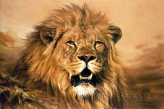 """Beautiful Cheap Paintings Reproduction African Animal Lion, Size: 36"""" x 24"""", $128. Url: http://www.oilpaintingshops.com/beautiful-cheap-paintings-reproduction-african-animal-lion-3140.html"""