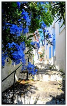Skiathos island Greece Beautiful Islands, Beautiful World, Wonderful Places, Beautiful Places, Skiathos Island, Places To Travel, Places To Visit, Greek Flowers, Holiday Places