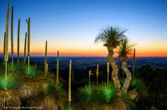 Bunya Mountains Sillouette at Dusk by Roger Harrison  on 500px