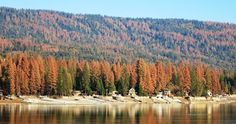 Since 2010, at least 66 million trees have died in California due to drought and rising temperatures, increasing the risk of catastrophic wildfires that