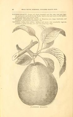 1881 - General descriptive catalogue of fruit and ornamental trees, shrubs, roses, bulbs, greenhouse and garden plants : - Biodiversity Heritage Library