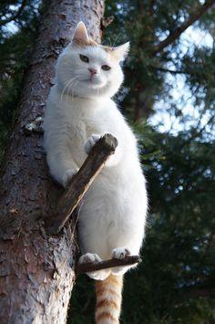 とまりぎ - かご猫 Blog