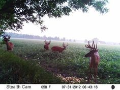 June 24, 2013 Deer Hunting: How to Set Up Trail Cameras and Pattern Mature Bucks