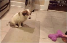 """A defiant puppy refused to let """"the man"""" teach him how to catch. 