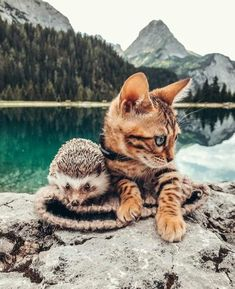 Cute Kittens, Cats And Kittens, Ragdoll Kittens, Tabby Cats, Kitty Cats, Cute Little Animals, Baby Animals, Grand Chat, Adventure Cat