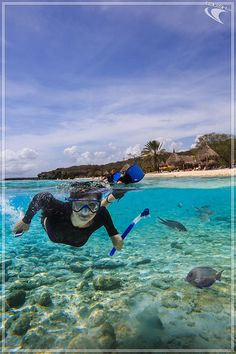 BLOG: Curacao's underwater world easily accessed from the beach