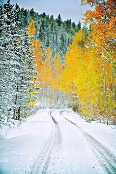 ✯ Winter Back Road