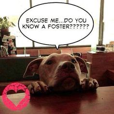 ❤️WE NEED TEXAS FOSTERS IF YOU CAN'T COMMIT TO ADOPT, COULD YOU PLEASE FOSTER...SHORT OR LONG TERM Shelter Animals of Garland, Mesquite and Rowlett, Texas @ShelterAnimalsofGarland.Mesquite.Rowlett.Texas PHOTO WILL TAKE YOU TO SEE 'FRIENDS' IN NEED