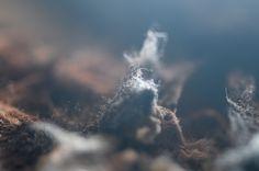 mold | da sena demir