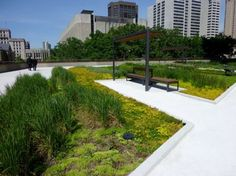 Toronto Green Roof (photo credit: Lloyd Alter) sedum-covered and artfully landscaped roof garden - nathan phillips