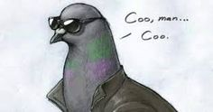 Image result for coo man coo