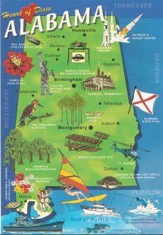 alabama state flower - Google Search