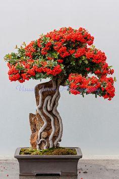 ~~bonsai by Jason Cordell~~