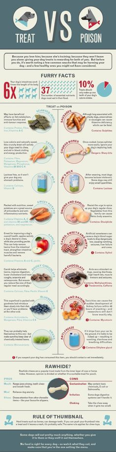Treat vs poison Dangerous Foods For Dogs, Good Food For Dogs, Human Food For Dogs, Foods Dogs Cant Eat, Dog Safe Foods, Healthy Foods For Dogs, Snacks For Dogs, Toxic Foods For Dogs, Foods Bad For Dogs