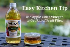 Easy kitchen tips how to get rid of fruit flies