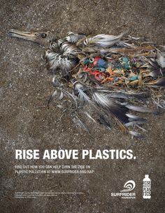 Rise Above Plastics::This is what is happening to shore birds in alarmingly increasing numbers. This bird died because it was ingesting plastic discarded by humnan beings. I have read that the fish are also ingesting partially broken down plastics, too. It litters the ocean floor.