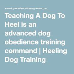 Teaching A Dog To Heel is an advanced dog obedience training command | Heeling Dog Training #DogObedienceTipsandAdvice #dogobediencetraining