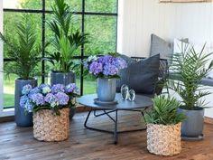 Slik pynter du et vakkert konfirmasjonsbord Nye, Plants, Outdoors, Gardening, Ideas, Terrace, Garten, Flora, Plant