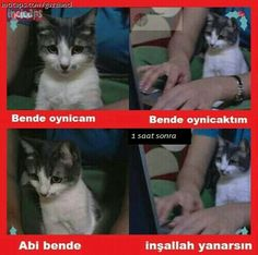 Ya abi bende oynicam diyorum Funny Share, Comedy Zone, Mortal Combat, Just Smile, Humor, Funny Tweets, Tumblr Funny, Kittens Cutest, Good Times