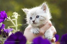 Spring Kitten IV by ashtan
