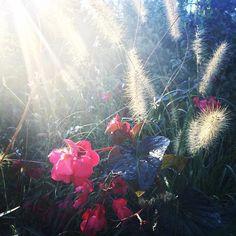 Morning in the Smithsonian Gardens Buttterfly Habitat Garden.
