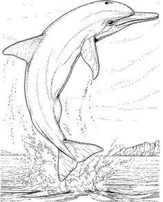 Delphin Malvorlagen
