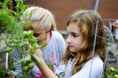 Evergreen Elementary garden