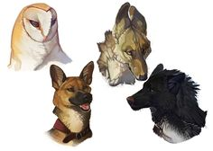 Floating Heads by *CoyoteMange on deviantART