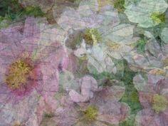 ある秋の日、北の丸公園の近くを歩いていたら猫がいました。 コスモスも咲いていたりして……。 ちょっと、どうなるかなぁ?と思ってこの画像を作成してみました。