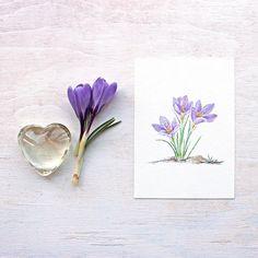 Art print featuring a purple crocuses watercolour by Kathleen Maunder, trowelandpaintbrush