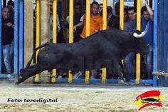 torodigital: Un astado de Lagunajanda abre las fiestas de la S...