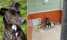 Maggie is still searching for a home - after ELEVEN years in kennels