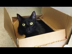 Why Are Cats Attracted To Boxes? The Answer May Surprise You.