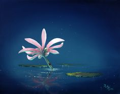 Water Lilly _ 16x20 _ Rob Kaz
