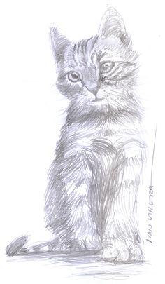 gato a lápiz