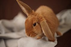 I hear you ? #cute #rabbit #animal #pet #cat - Discover other photos of this Rabbit HERE ==> http://www.yummypets.com/pic/2253857