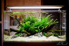 aquascaping square tank - Google Search