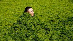 Un manto de algas tiñe de verde el Mar Amarillo