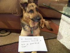 Dog Shaming features the most hilarious, most shameful, and never-before-seen doggie misdeeds. Join us by sharing in the shaming and laughing as Dog Shaming reminds us that unconditional love goes both ways. Funny Animal Memes, Cute Funny Animals, Funny Animal Pictures, Funny Dogs, Animal Humor, Funny Fails, Funny Quotes, Funny Memes, Cat Shaming