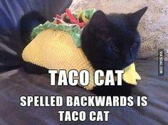 Taco cat hahaha!