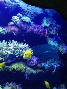 Aquarium Restaurant in Kemah, TX