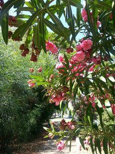 Quarteira, Portugal Algarve, Portugal, Mother Nature, Bucket, Places, Travel, Porto, Garden, Parks