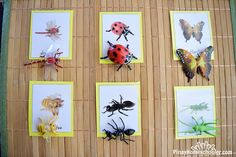 InsectMatchingCards