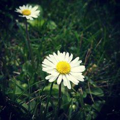 flower in our garden, somewhere in Slovakia
