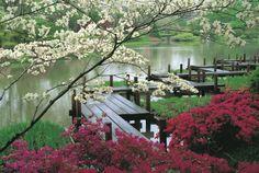 Frühlingsbild mit Japanischem Garten mit blühenden Bäumen